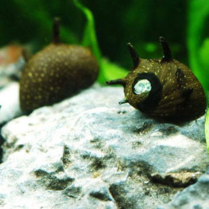 石巻貝ほか、淡水貝