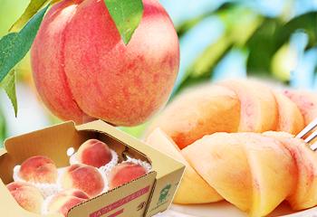 産地直送『山梨の桃』秀品 1.5kg