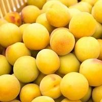 福井県産黄金の梅 Yahoo!店