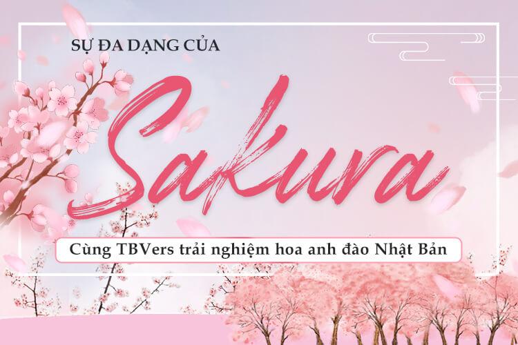 Sự đa dạng của Sakura - Cùng TBVers trải nghiệm hoa anh đào Nhật Bản