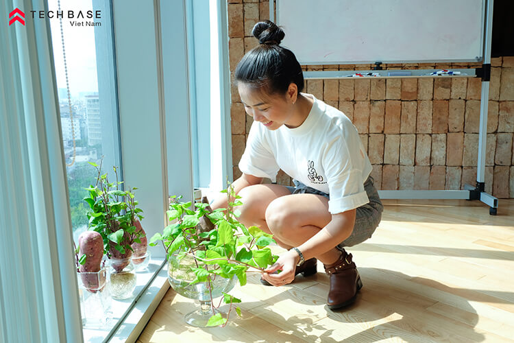 Planting-Growing-Sweet-Potato-In-TBV-Office-May-2020