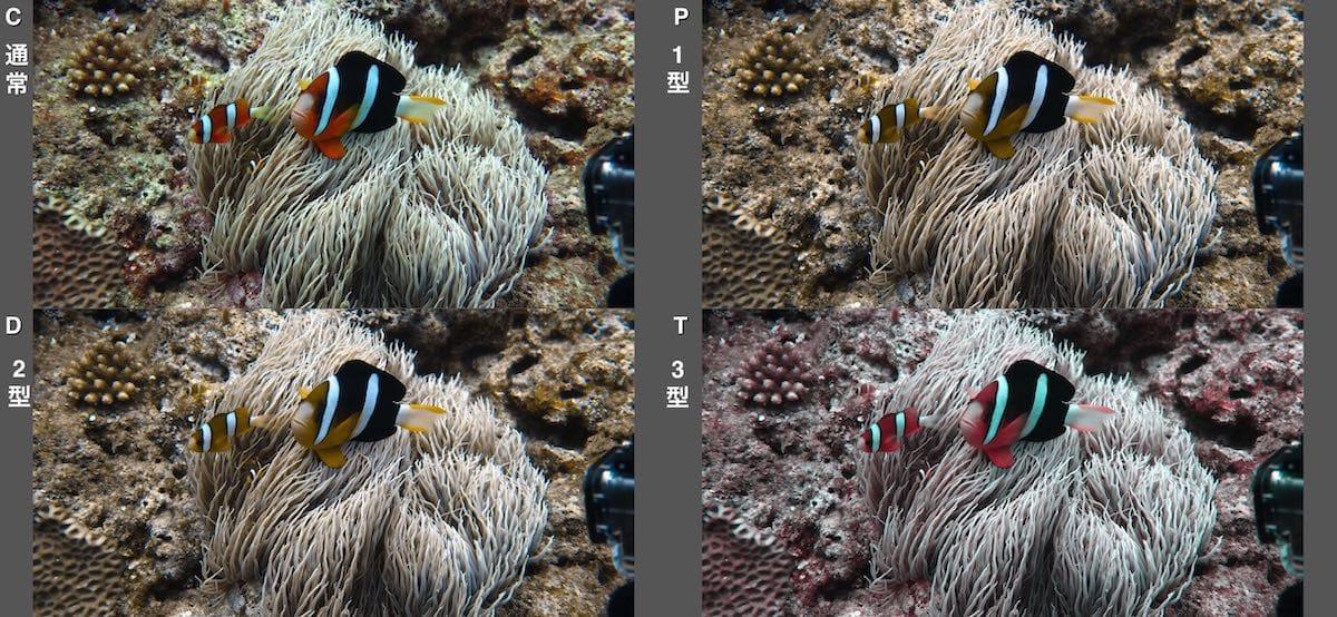 4種類の色覚障がいの人の見え方をクマノミの写真で紹介