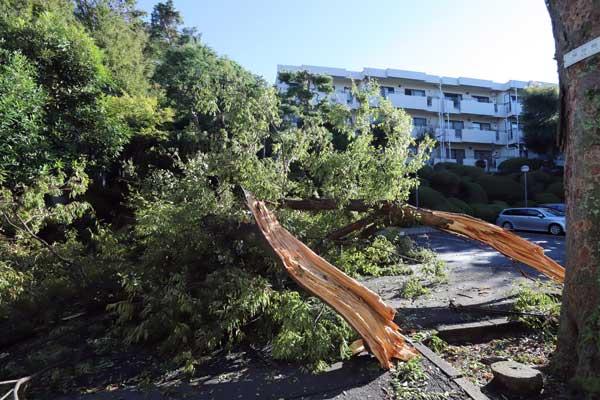 大型台風19号 東日本各地に被害 東京都・世田谷区