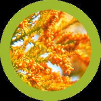 スギ花粉の動き