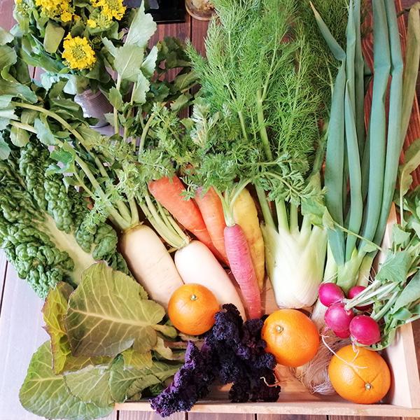 有機野菜セットの写真