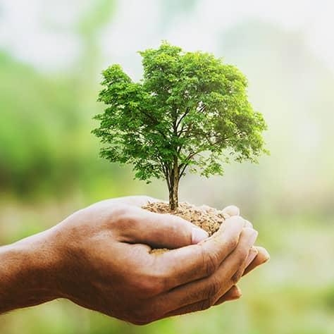 地球環境保全に欠かせない<br>「森林を守る」商品を買おう!<br>「わかる、えらぶ、エシカル」特集(8)の写真