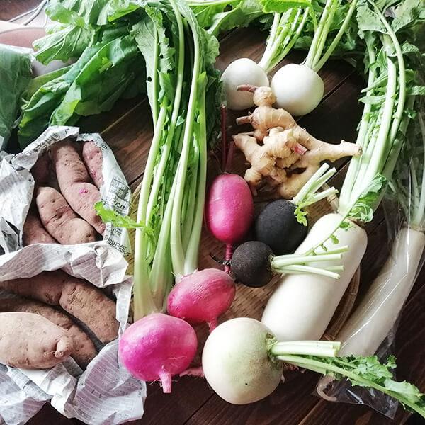 九州産 有機野菜「Yomoyamaya」さんの季節の有機野菜おまかせセット