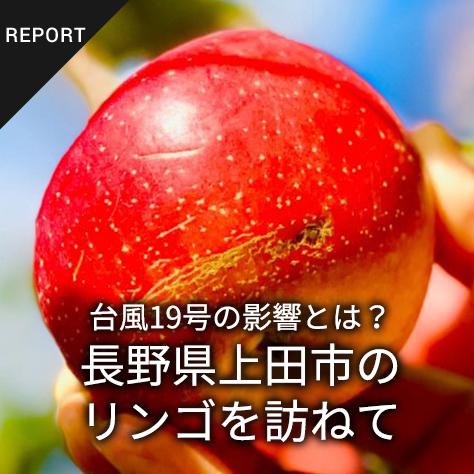 台風19号の影響とは?長野県上田市のリンゴを訪ねて