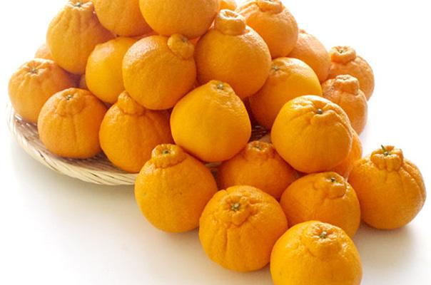 柑橘の島、広島・瀬戸田のしらぬひ
