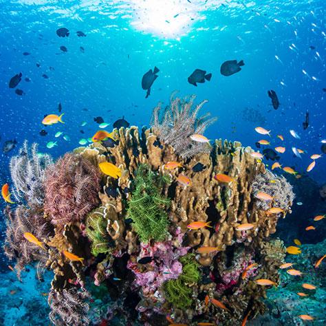たくさんの恵みを与えてくれる母なる海。<br>海を守る商品を買おう!<br>「わかる、えらぶ、エシカル」特集(14)
