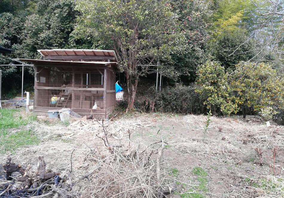 鳥小屋、ゆず、金柑、お茶の木