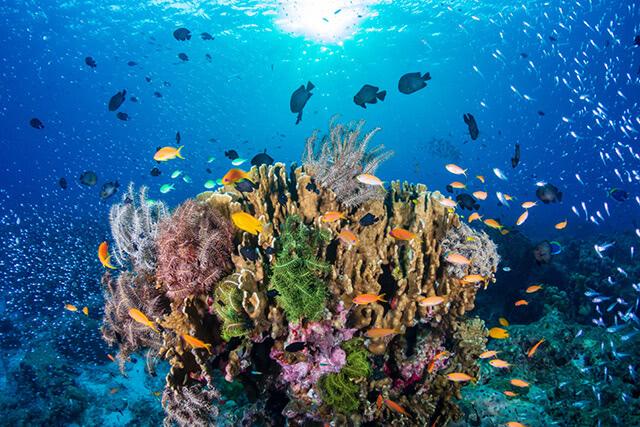 たくさんの恵みを与えてくれる母なる海。海を守る商品を買おう!