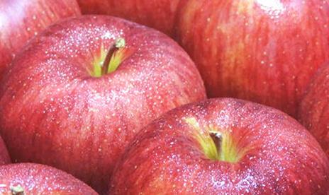 贈答用「ふじリンゴ」