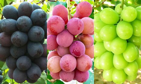 ひとくちの果実 食べ比べ