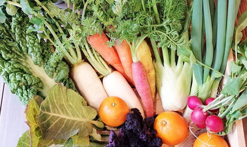 農園てとての有機野菜セット