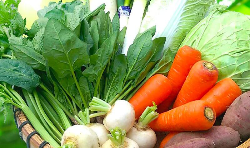 地球畑の有機野菜セット