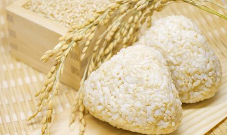 農薬不使用 コシヒカリ玄米